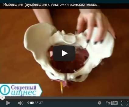Анатомия мышц тазового дна
